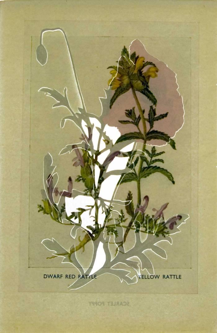 cut flowers Jo Howe Book sculpture experimentation